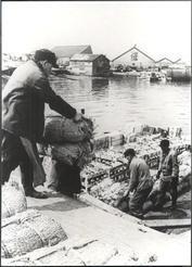 洞爺丸台風後連絡船の代役として活躍した機帆船への積み荷作業