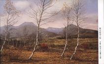 秋の妙高々原 夕陽に映ゆる山麓の白樺