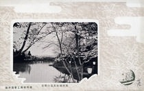 高田城趾万朶の桜花