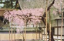 醍醐寺 Daigo Temple