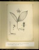 樺太植物図鑑原図 7