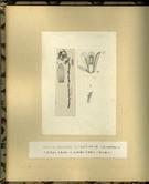 樺太植物図鑑原図 15