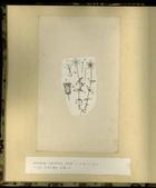 樺太植物図鑑原図 9